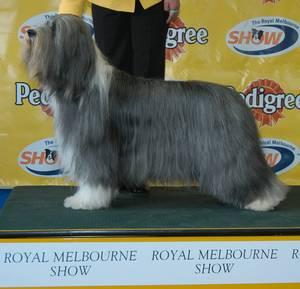 Royal Hobart Show Dog Entries